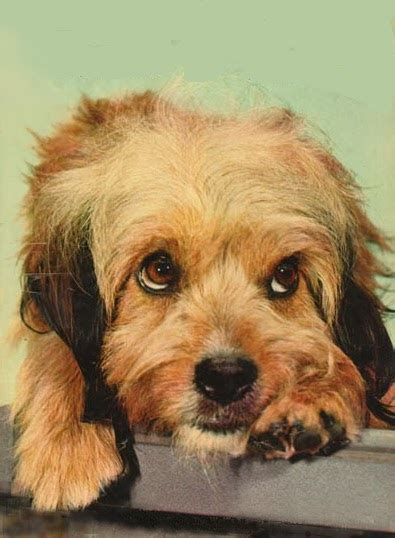 Most Famous Dogs: Most Famous TV/Movie Dogs
