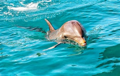 Swimming with Dolphins & Whale Watching | Bonjour Mauritius