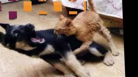 Funny Cats - Funny Videos That Will Make You Laugh So Hard